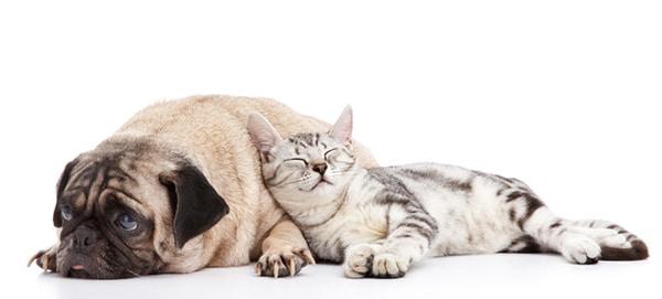 photodune-1632148-dog-and-cat-xsdsds
