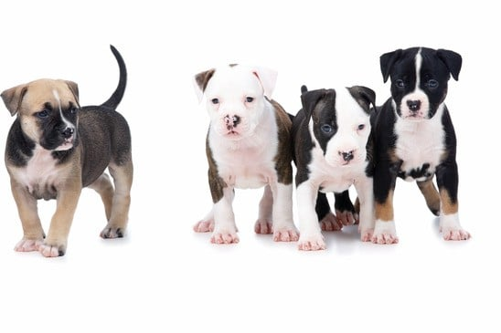 photodune-195873-left-out-of-the-pack-cute-puppy-dogs-xs