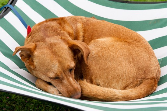 photodune-3343568-sleeping-dog-xs