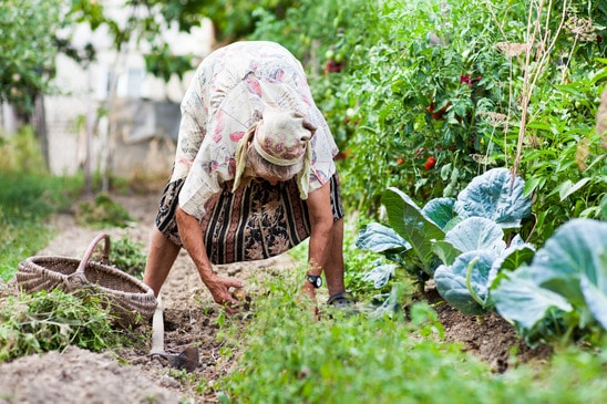 photodune-3144367-old-woman-in-the-garden-weeding-xs