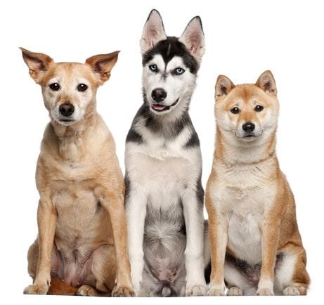 photodune-594101-mixed-breed-dog-xs