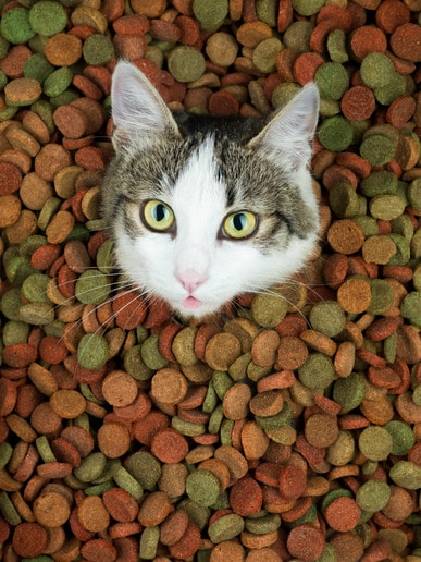 photodune-3611557-adorable-cat-with-her-tongue-out-xs
