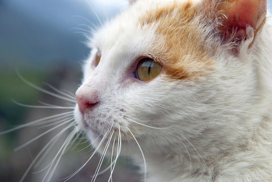 photodune-3765414-cat-face-xs