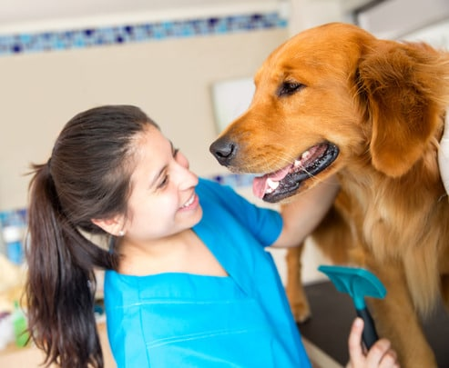 photodune-4739969-dog-at-the-vet-xs