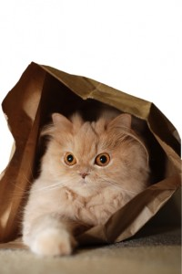 Cat's hides in the bag