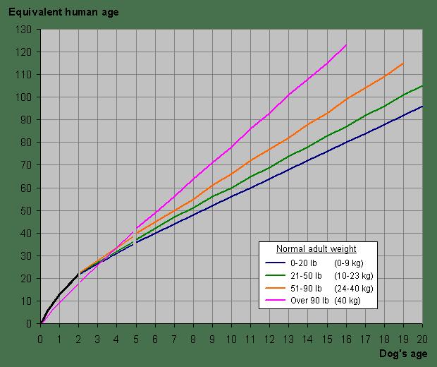 Dog years chart