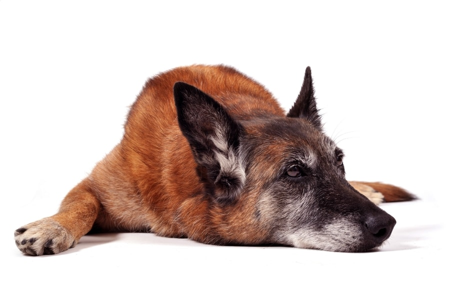 behavioral changes in senior dogs