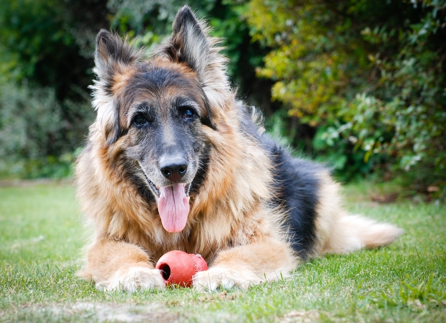 arthritis signs in dogs