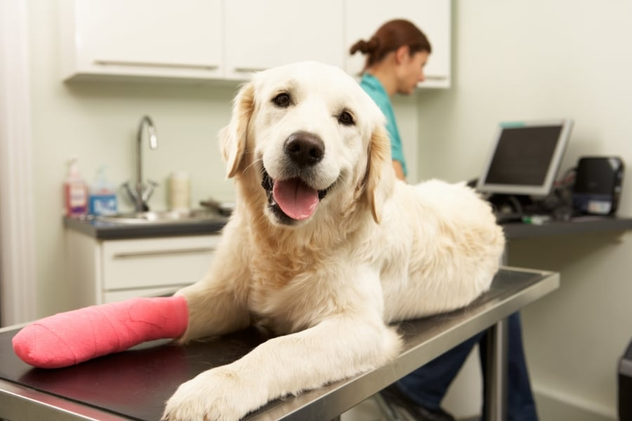common_pet_injuries-263099-edited