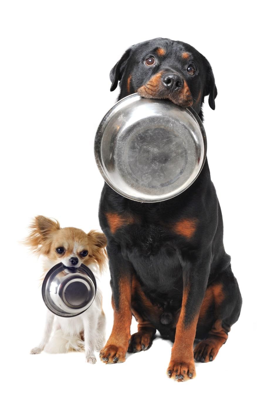 dog_arthritis_and_food-025372-edited