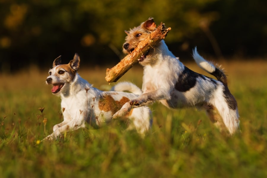 excerise_your_dog-568812-edited