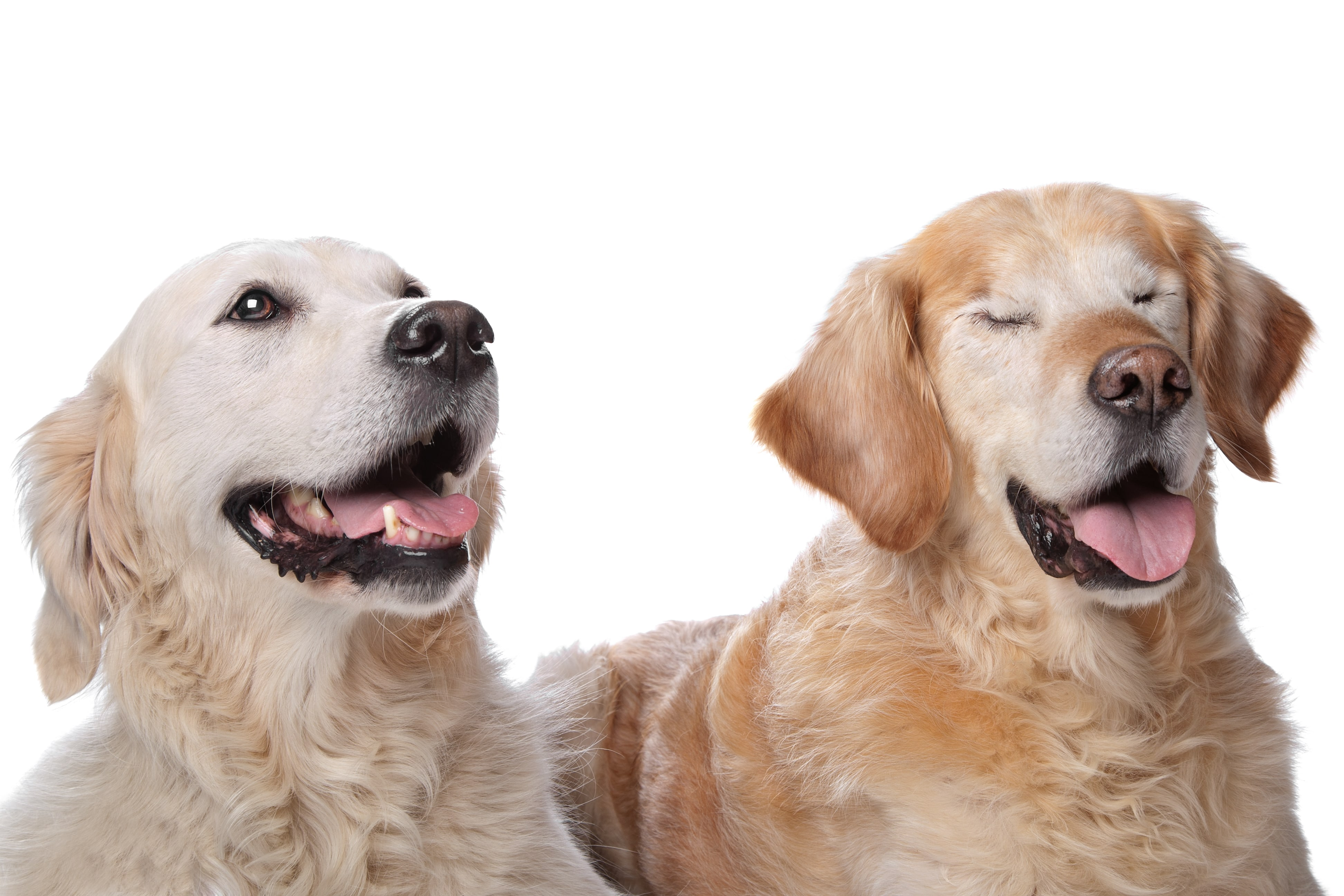 5 tips for living with a blind dog