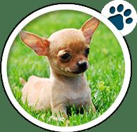 Sec3-Doggy1v1