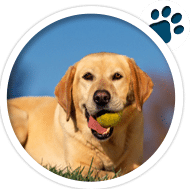 Sec3-Doggy2v1