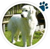 Sec3-Doggy3v1