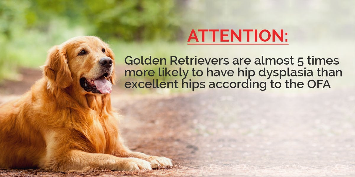 attention-golden