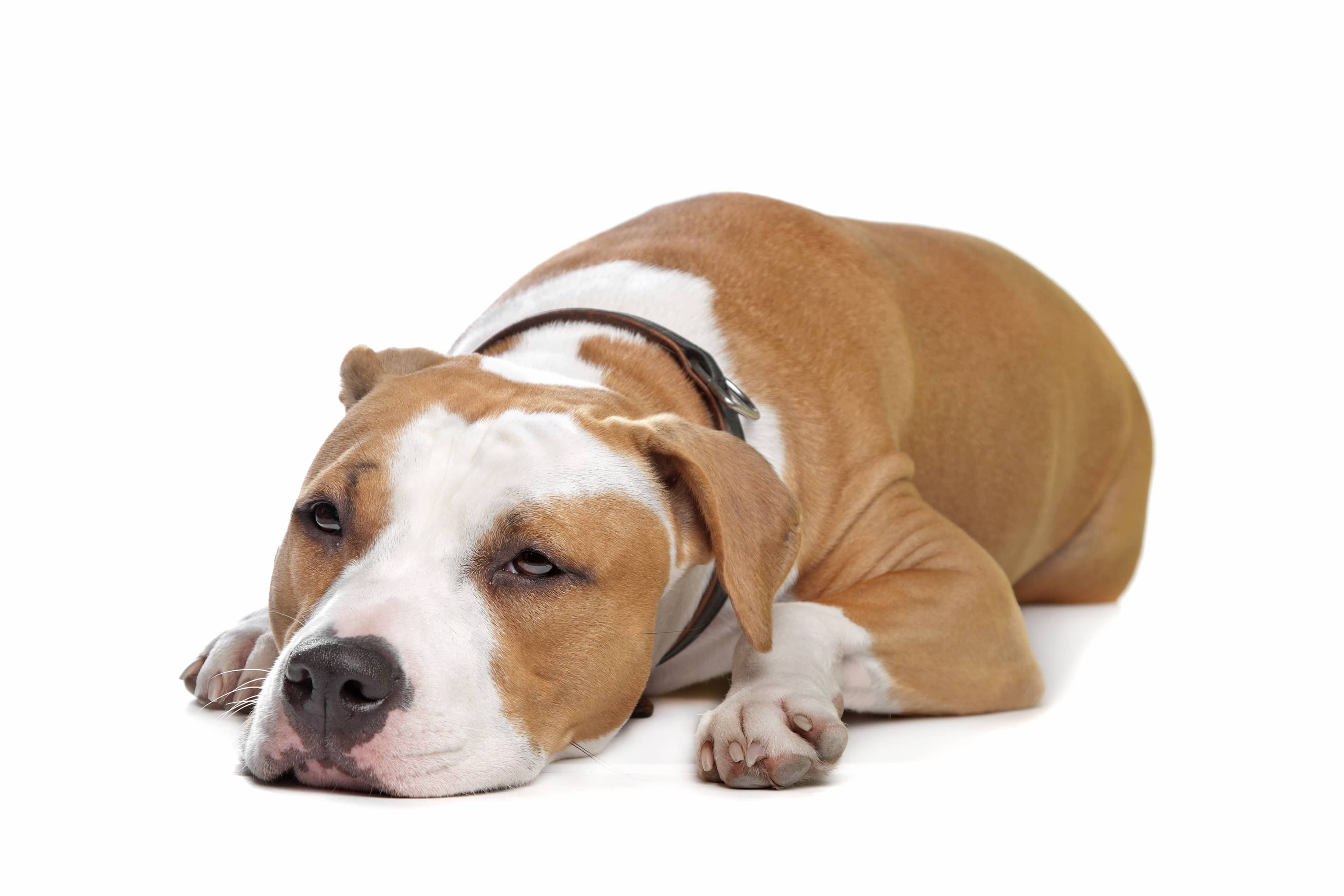 Natural Relief For Arthritis In Dogs